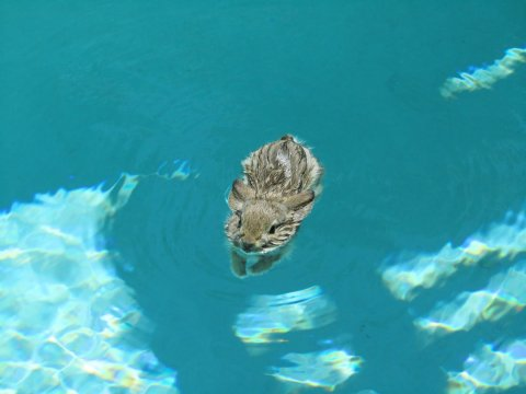 rabbit in pool
