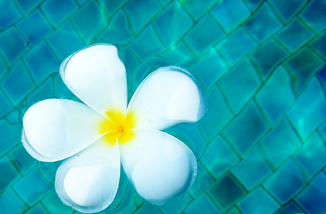 plants around pools