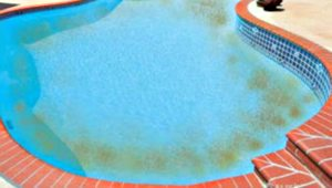 Pink Algae in Swimming Pools